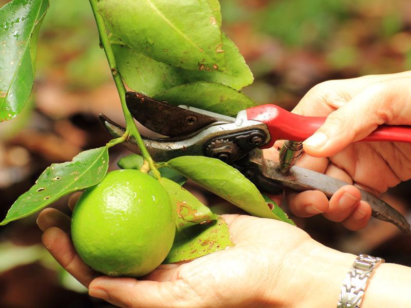 Potare Piante Da Frutta : Il consiglio di stagione garden sitter giardiniere a