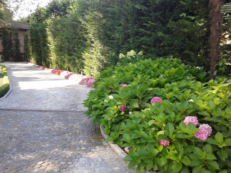 Green gallery garden sitter giardiniere a torino for Cespugli per giardino